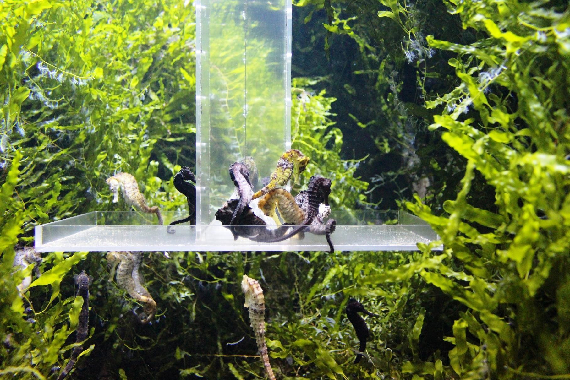 zoo di varsavia cavalluccio marino